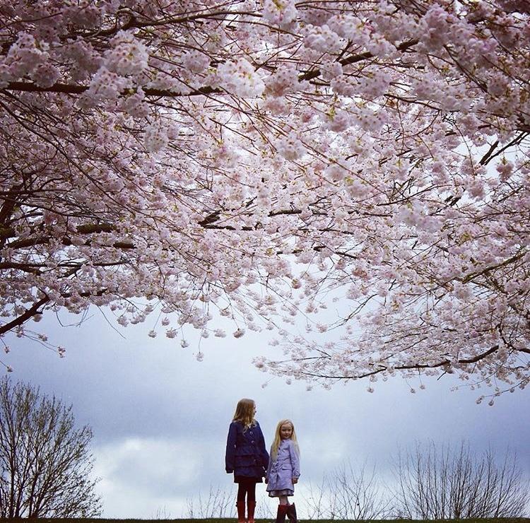 bc blossom photo watch