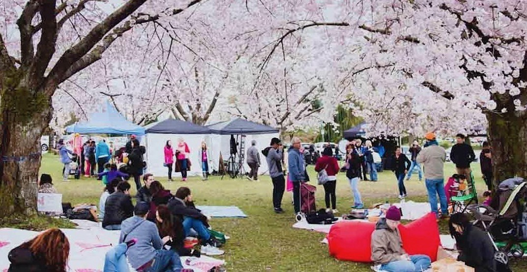 Cherry Blossom Festival changes date for 'The Big Picnic' due to poor weather