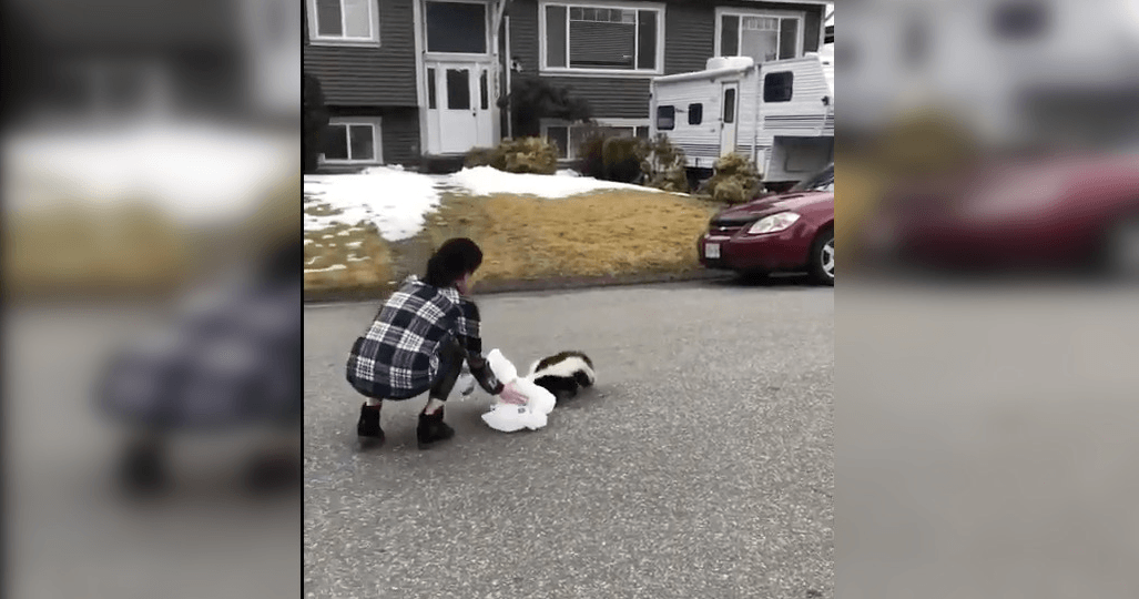 Brave woman wins award for rescuing skunk with tiny cup stuck on head (VIDEO)