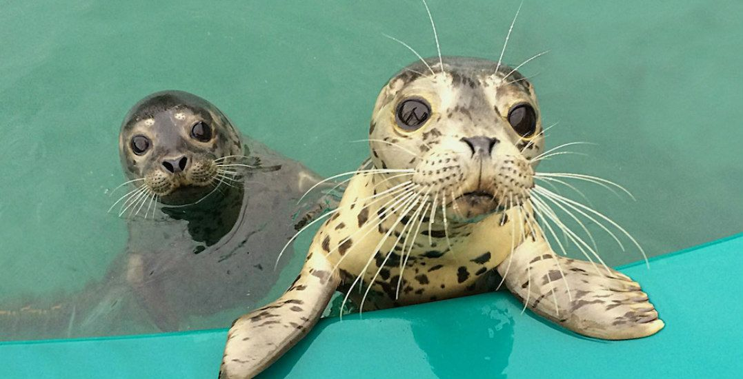 Spend date night with the ocean's most adorable mammals at Vancouver Aquarium (CONTEST)