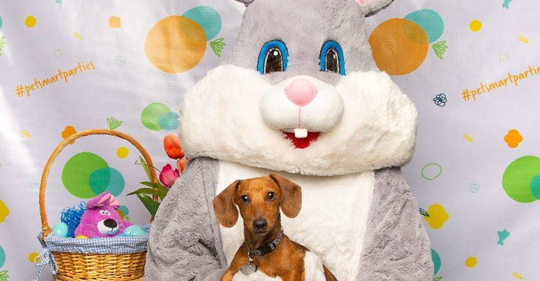 You can get pawsitively adorable Easter photos for your pet for free this April