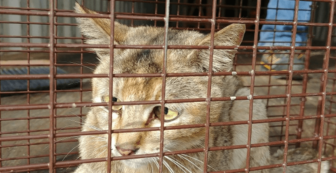 Cat found after 3-week journey from China inside shipping container