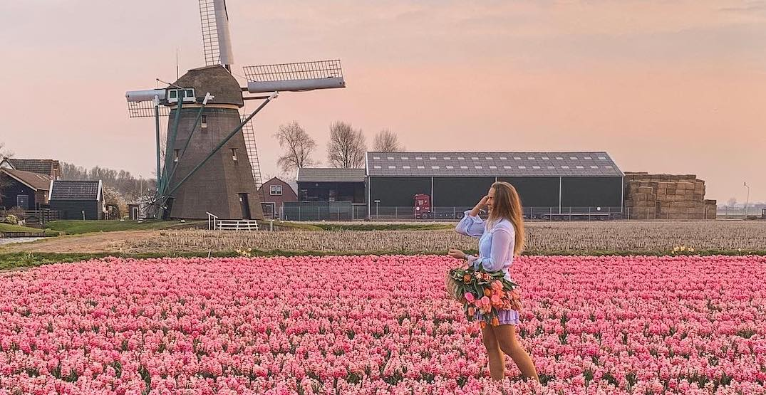 Treat your eyes to the most beautiful tulip festivals around the world (PHOTOS)