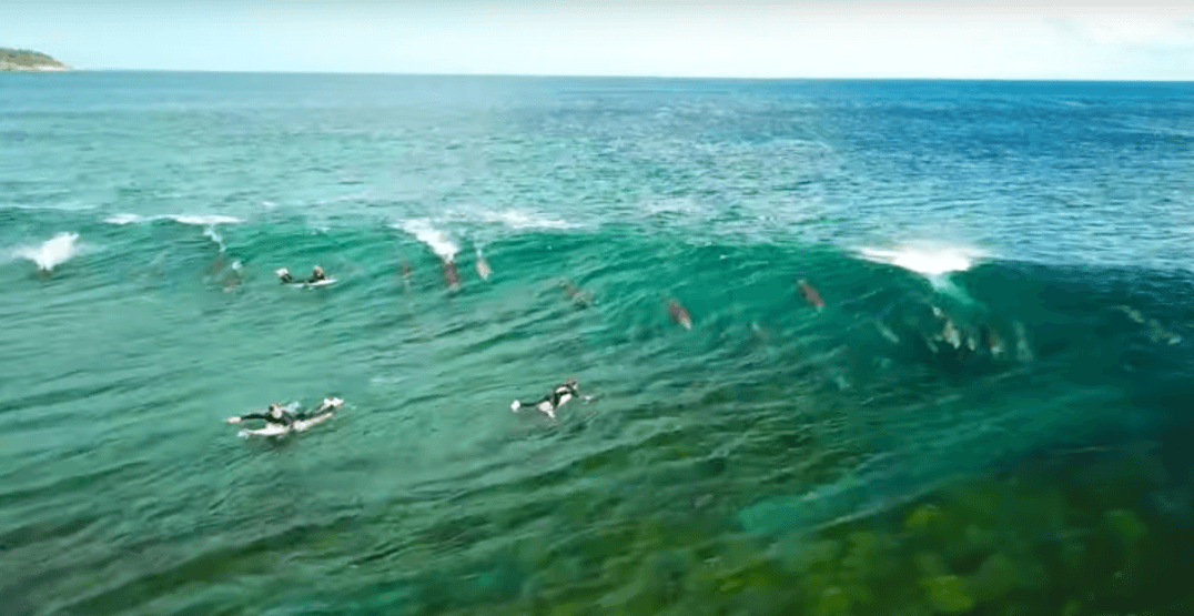Incredible footage shows dolphins zooming under surfers to ride the wave (VIDEO)