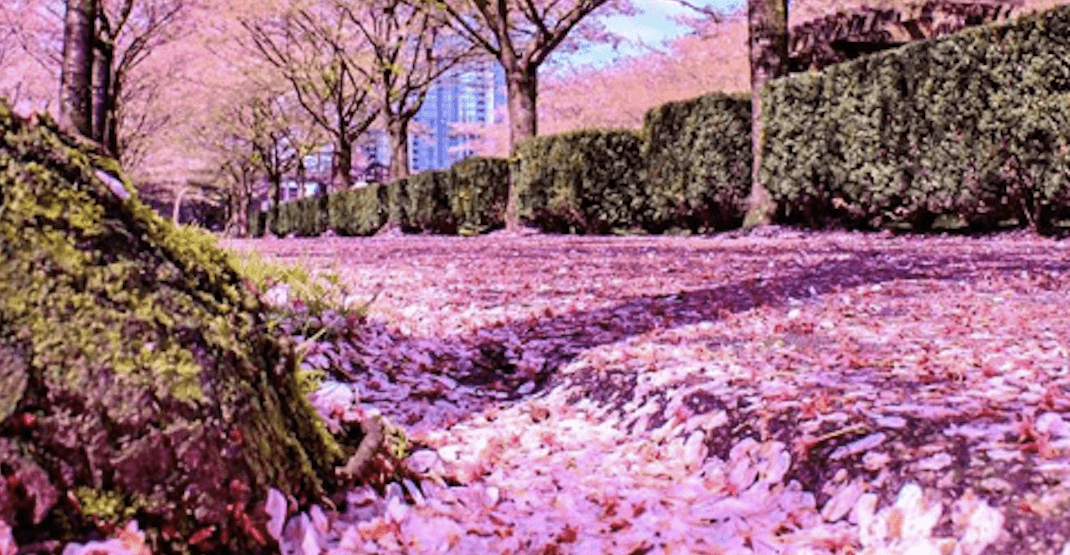 The 10 best places to take spring photos in Vancouver
