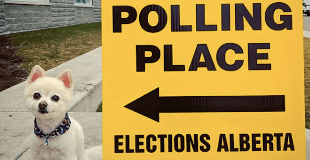 Albertans of all ages are taking election day selfies (PHOTOS)