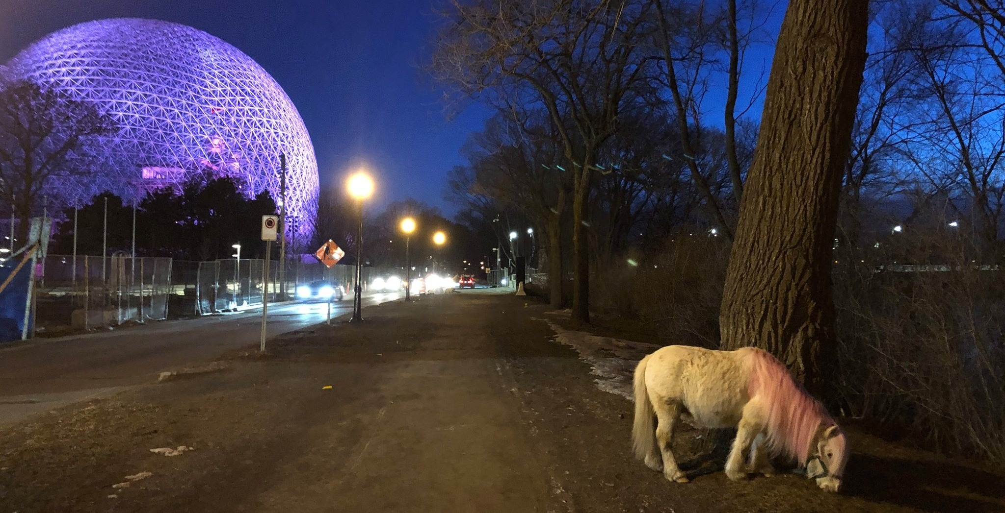 A mysterious mini pink-maned pony has been spotted in Montreal (PHOTOS)