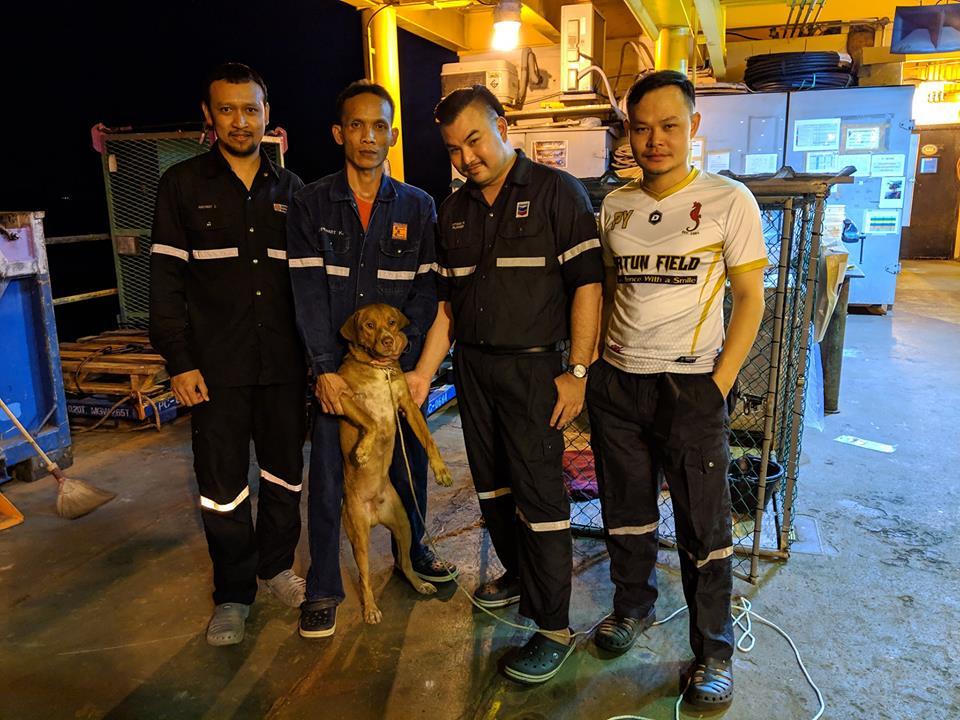 dog thailand
