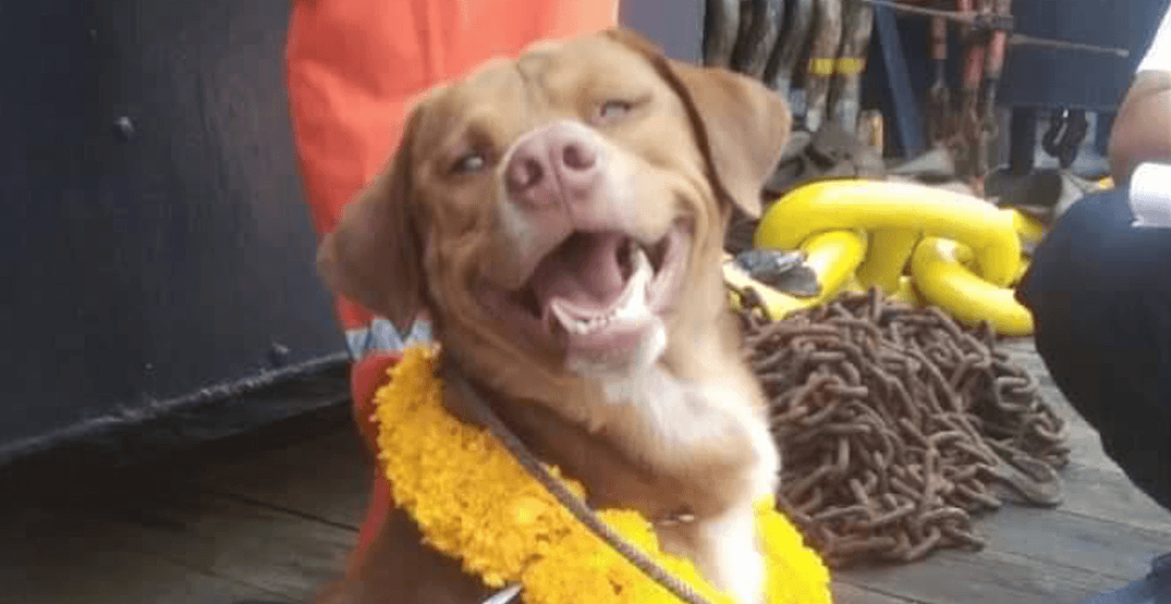 This sweet dog was found stranded 220 km away from land
