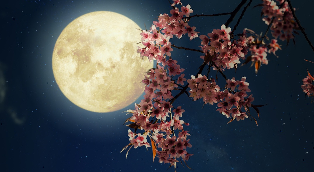 A beautiful flower moon is taking over Vancouver skies next month