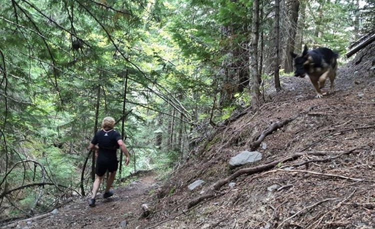 $1,000 reward offered after dog dies of suspected Strychnine poisoning on BC trail