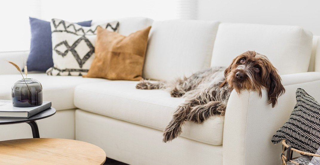 Apartment development's '8 legs' pet policy applauded by rental advocates