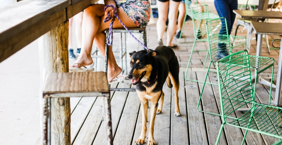 8 dog-friendly patios in Vancouver you need to visit this summer