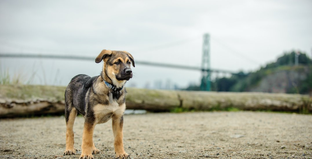 The 10 most scenic dog-friendly beaches in and around Vancouver