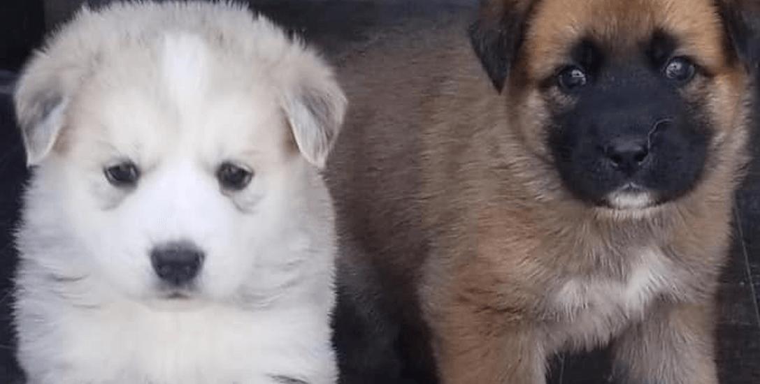 Adorable adoption event mixes pints and puppies (PHOTOS)