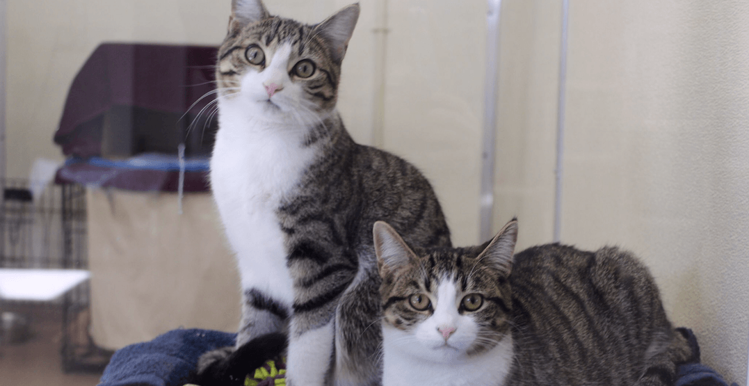 Over 300 cats rescued from hoarding situation now up for adoption