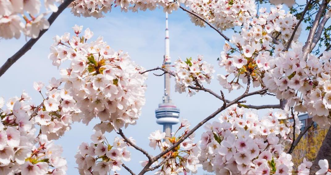 16 things to do in Toronto today: Saturday, May 11