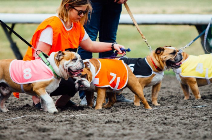 Bulldog, corgi, and wiener dog races are back at Hastings