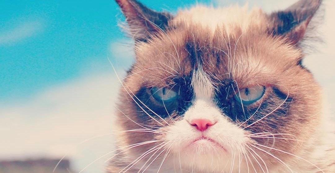 Internet sensation Grumpy Cat has died at age 7
