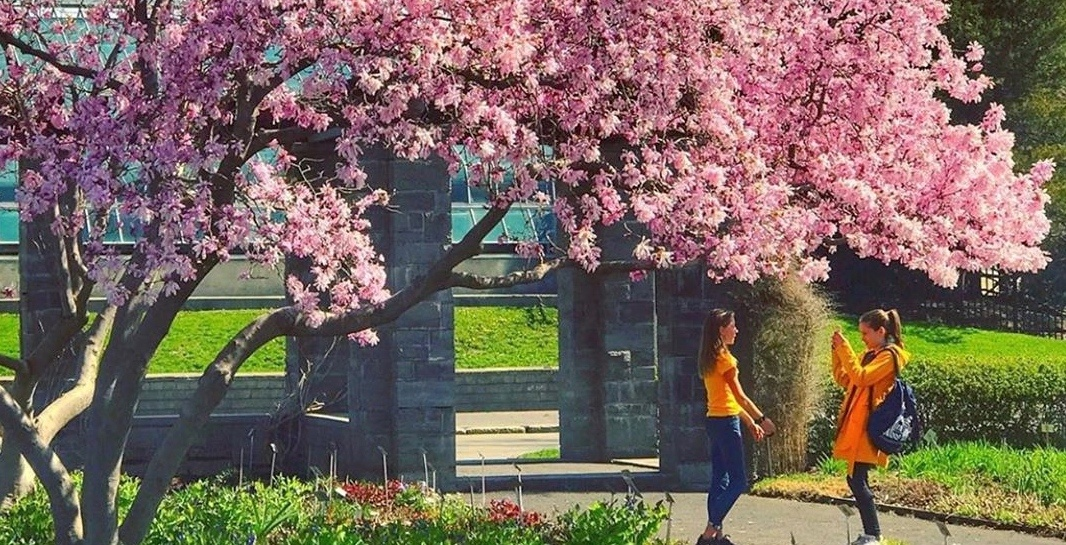 Cherry blossoms and flowers are blooming at the Montreal Botanical Garden (PHOTOS)