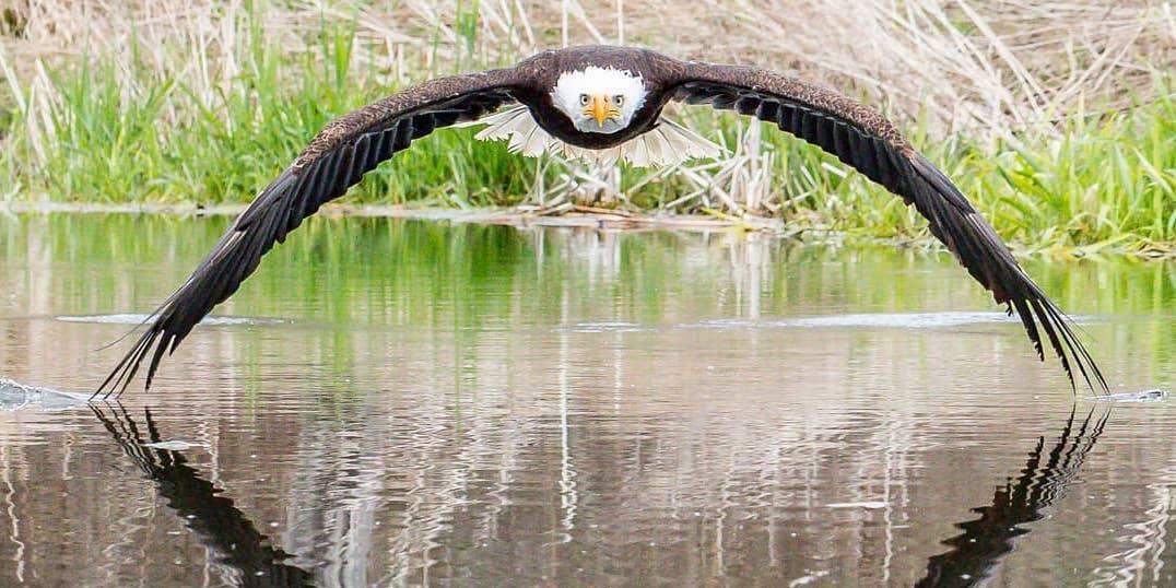 Ontario photographer's incredible bald eagle photo goes viral