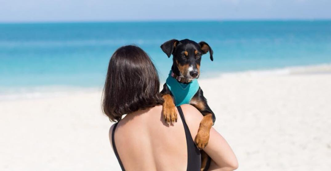 Adopt Potcake puppies from this tropical island for free