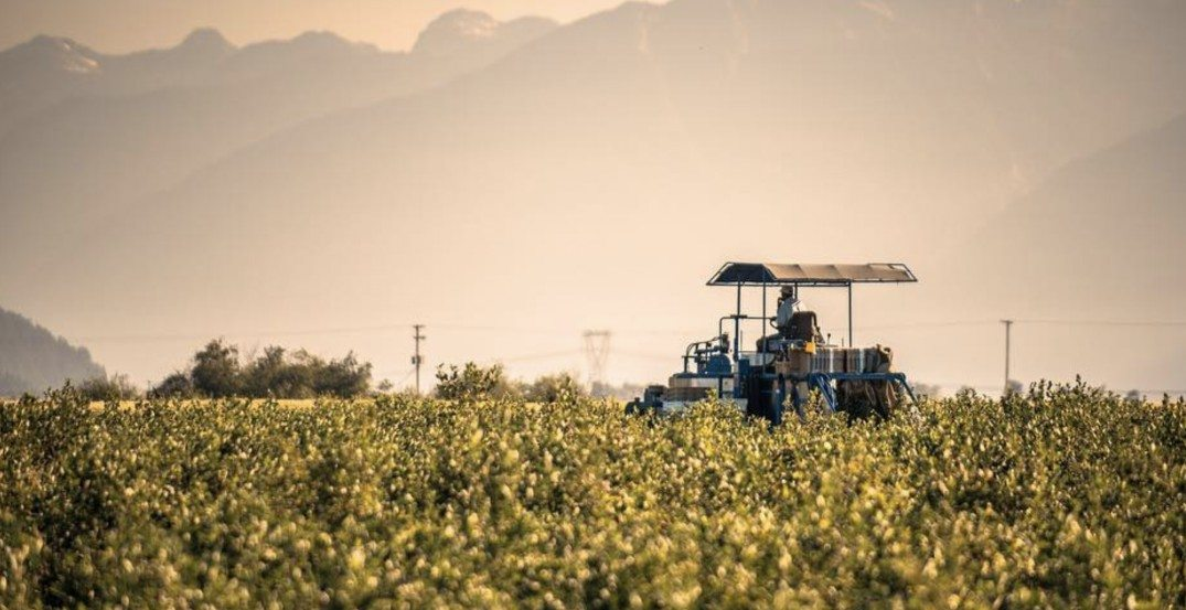 Guatemalan farm workers speak out against Aquilini Group