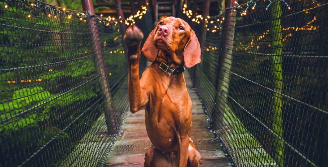 8 pup-friendly places to take your pooch in Vancouver