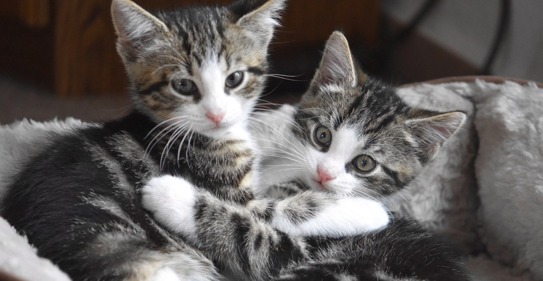 Foster homes desperately needed for litters of unwanted kittens