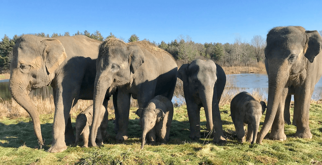 Elephant attacks trainer at African Lion Safari park in Ontario
