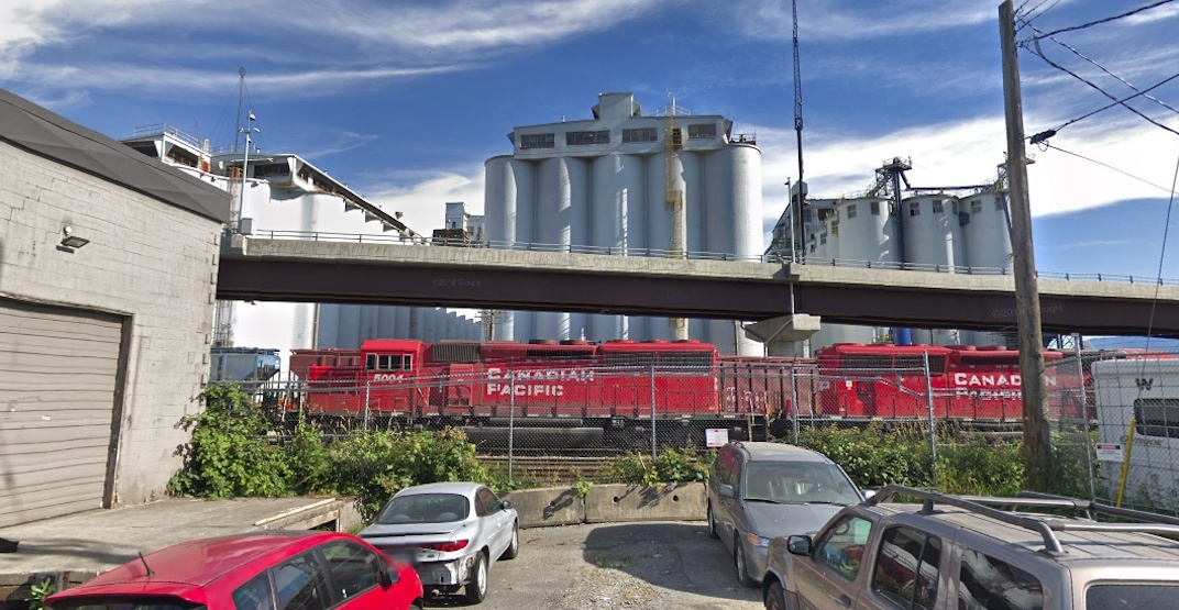 Vancouver grain silos contaminated with rat and bird