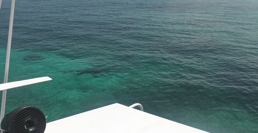 3 sharks kill tourist snorkelling in the water in the