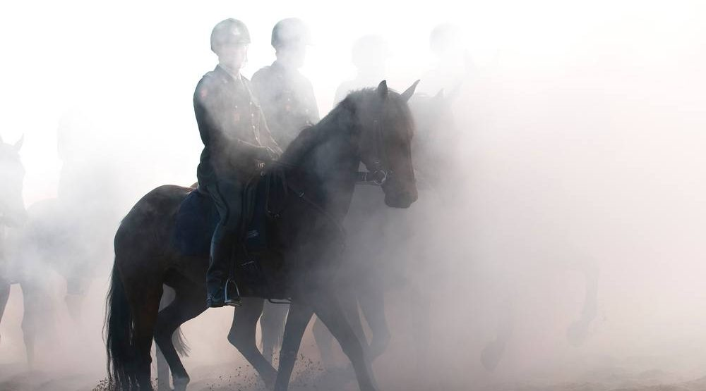 A line of cannabis products for horses is currently being developed in Canada