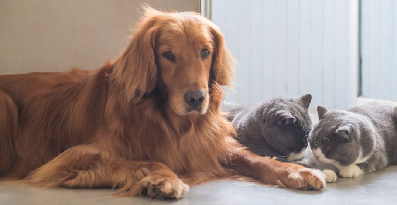 Ontario launches new 24-hour animal cruelty hotline