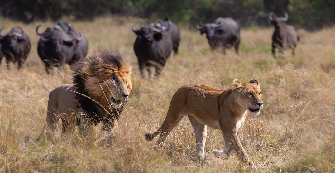 The iconic 'Big 5' animals you need to spot on your African safari