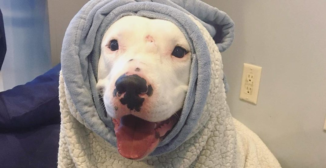 Shelter holding anniversary party for dog that's been homeless for an entire year