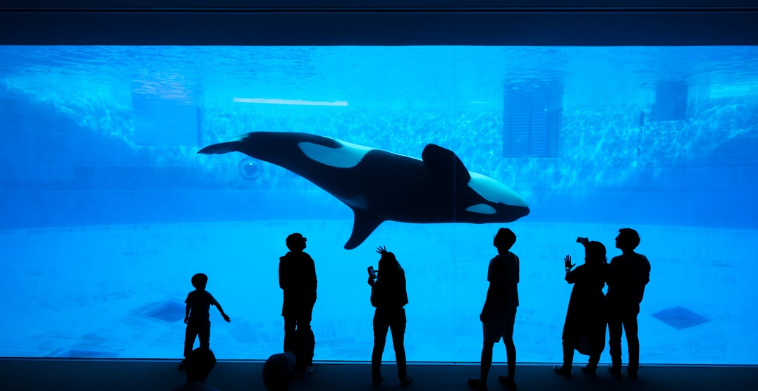 Opinion: Some things are just bad -- captivity is one of them