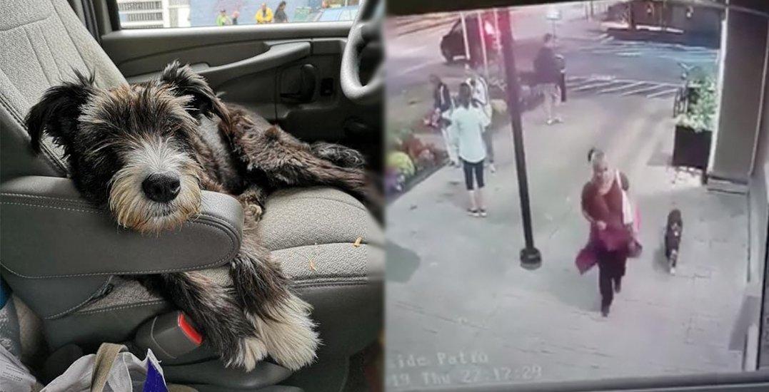 Brazen dog theft near Main Street SkyTrain Station caught on camera (VIDEO)