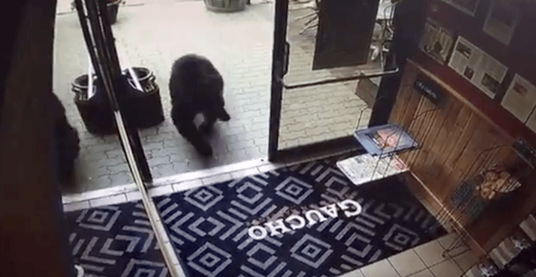 A black bear walked into a Rocky Mountain restaurant on Sunday (VIDEO)