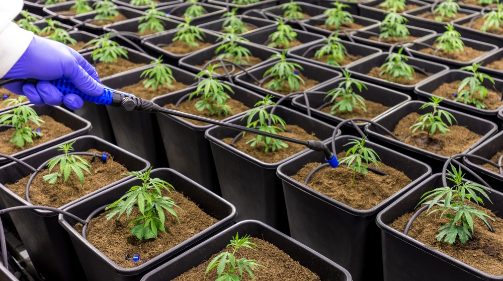 CannTrust forced to pull 5,000 kg of cannabis over unlicensed facility scandal