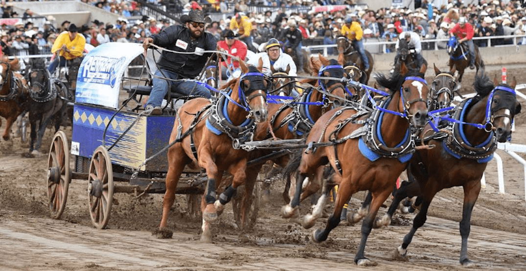 Second horse dies during chuckwagon races at Calgary Stampede