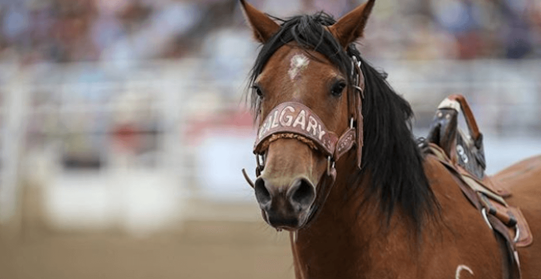 6 Horse Deaths At Calgary Stampede Sparks Review Of