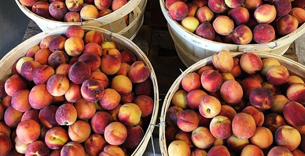 Celebrate the annual peach harvest in Niagara this month