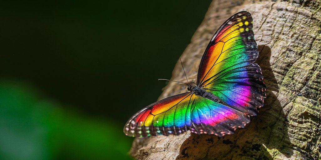Win VIP tickets to celebrate Pride at Vancouver Aquarium's After Hours (CONTEST)