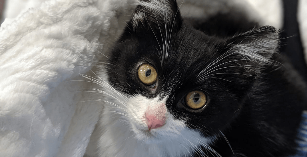 Adopt Me: 10 very cute orphaned kittens that need a forever home