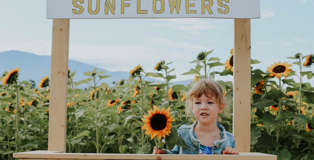 Win a Chilliwack Sunflower Festival experience for two this summer (CONTEST)