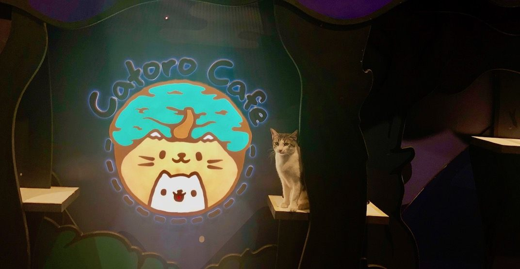 First look at Vancouver's new cat cafe 'Catoro' before it opens July 29