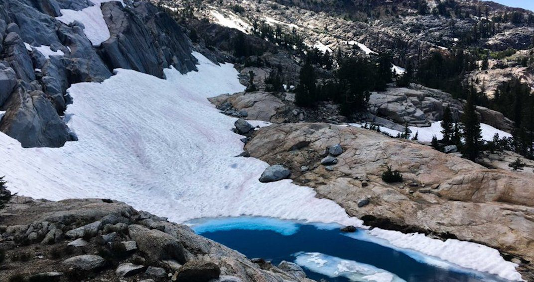 Colourful 'watermelon snow' appears in US national park