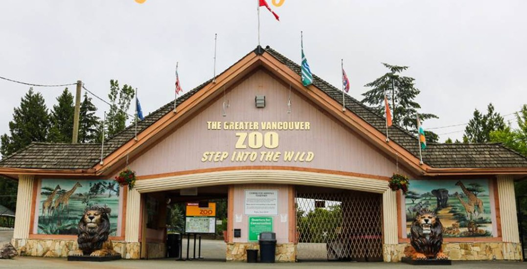 Animals at Greater Vancouver Zoo are being failed: report