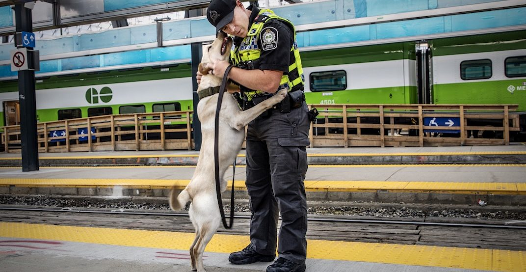 Metrolinx's (adorable) K9 unit begins patrol at Union Station today